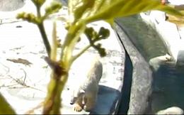 Московский зоопарк запустил онлайн-трансляции из вольера с белыми медведями