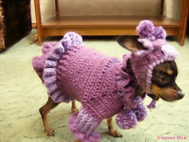 Одежда для собак своими руками крючком видео
