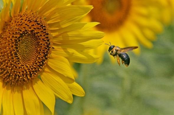 Bumblebee online dating