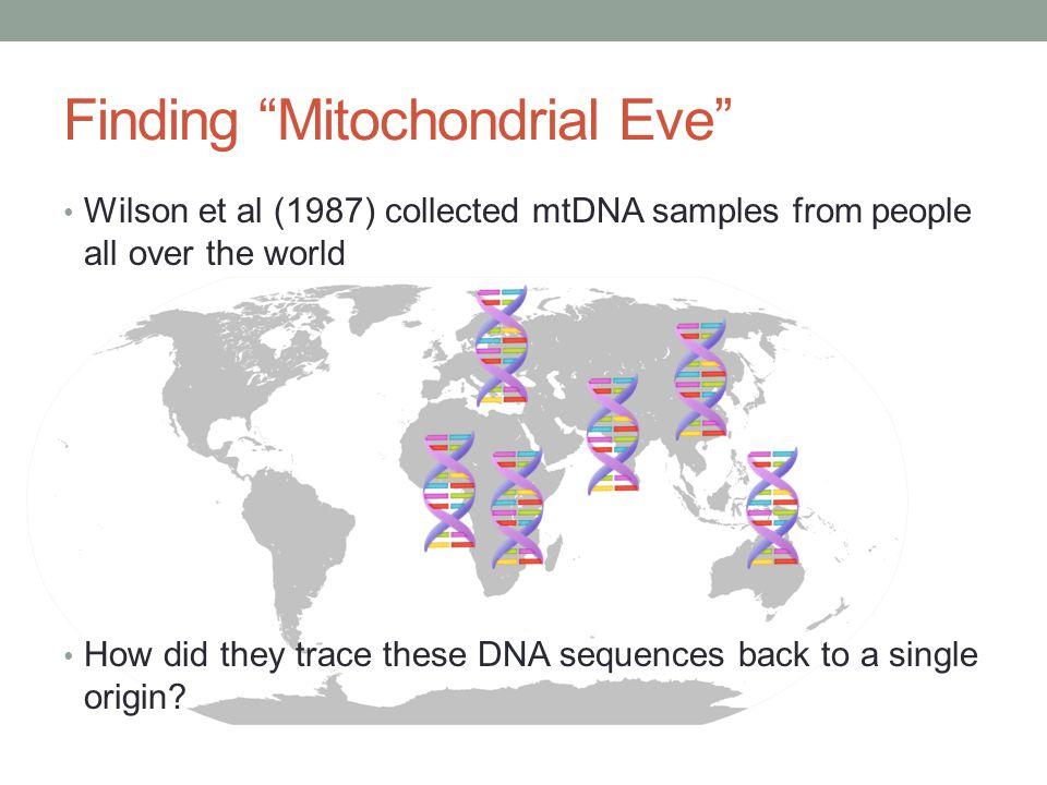Single origin hypothesis