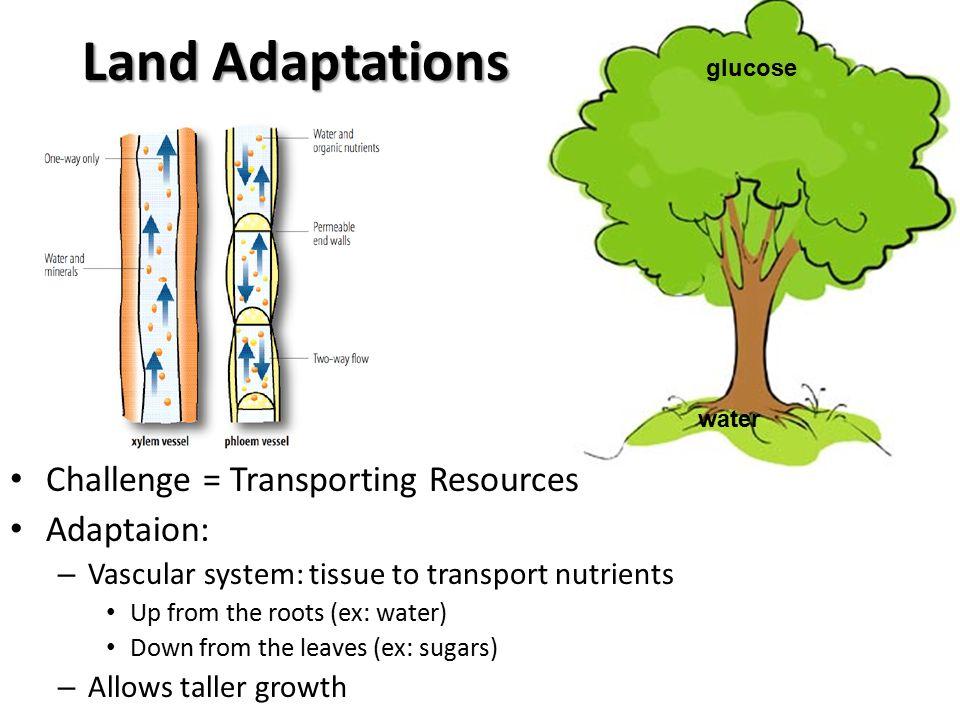 Plants hypothesis