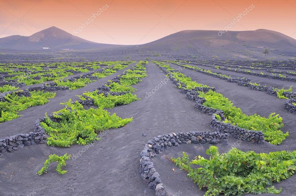 Земельный участок в остров Халки