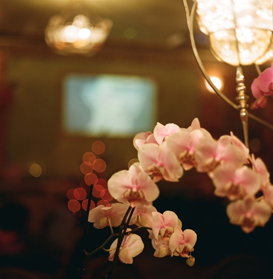 Ресторан Фрида - фотография 9 - проектор и орхидея