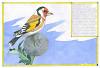 Параллельная орнитология