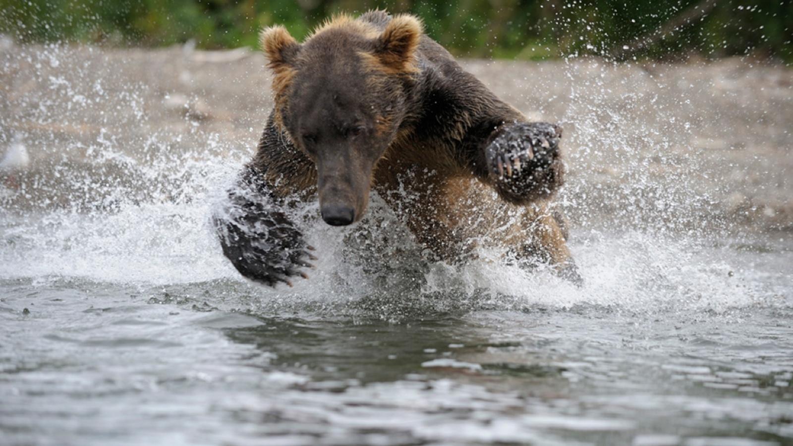 Земля медведей смотреть фото