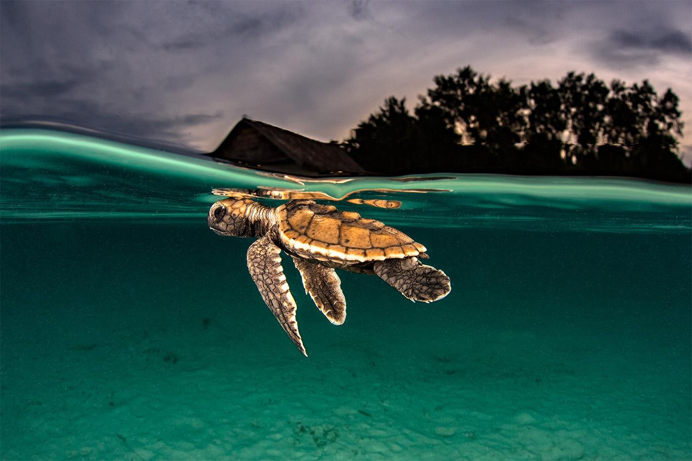 Золотая черепаха-2018 смотреть фото