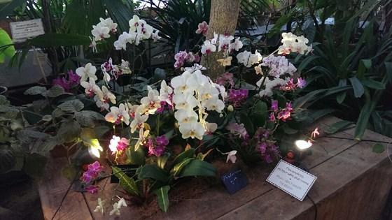 V Зимний фестиваль орхидей