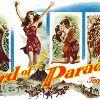 Райская птичка (Bird of Paradise)
