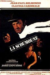 Приносящий беду / La Scoumoune
