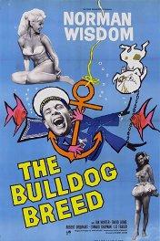 Мистер Питкин: Порода бульдог / The Bulldog Breed