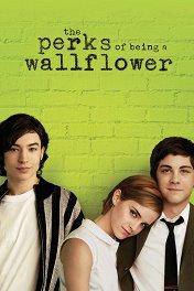 Хорошо быть тихоней / The Perks of Being a Wallflower