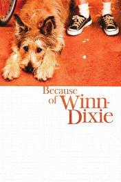 Благодаря Винн-Дикси / Because of Winn-Dixie