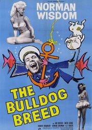 Постер Мистер Питкин: Порода бульдог
