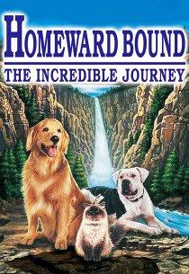 Дорога домой: Невероятное путешествие
