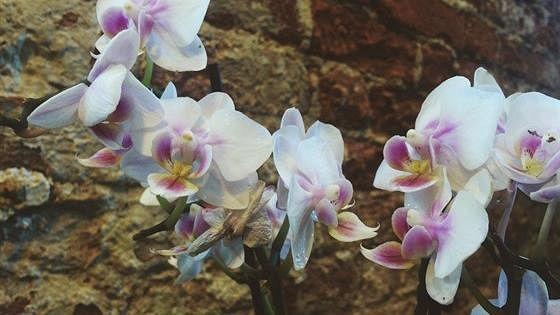 VI Зимний фестиваль орхидей