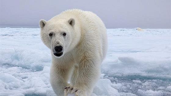 Арктика: вчера, сегодня, завтра