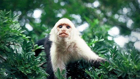 Загадка царства обезьян (The Riddle of Monkey Kingdom. Mystery of Amazon)