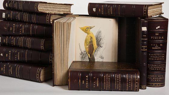 1368 дятлов в неизвестной рукописи