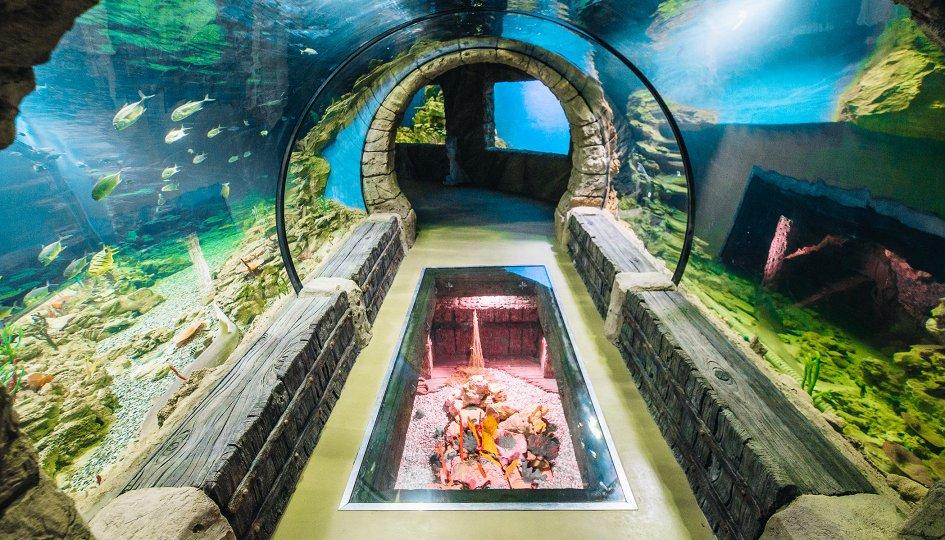 Выставки: Океанариум