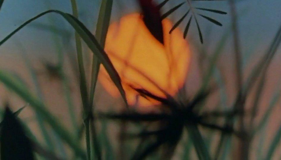 Кино: «Путешествие муравья»