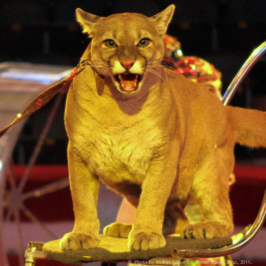 Заказать билеты в гомельский цирк